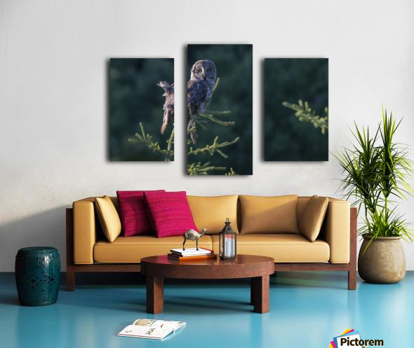 Great Grey Owl - Tree Top Hunting Canvas print