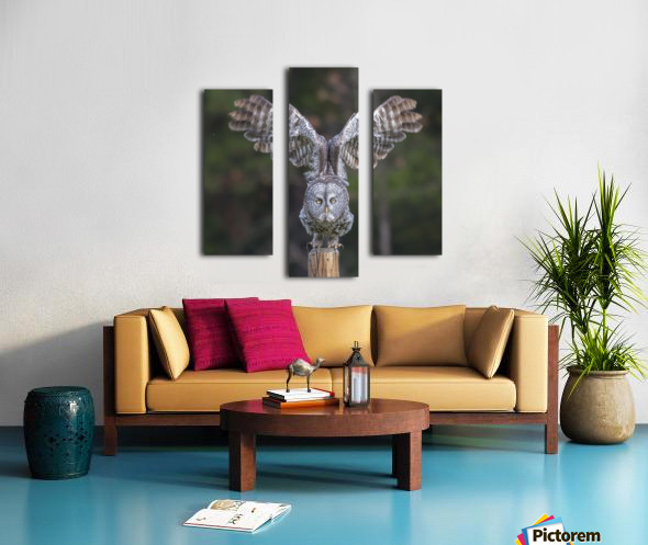 Great Grey Owl - Cleared for Take Off Canvas print