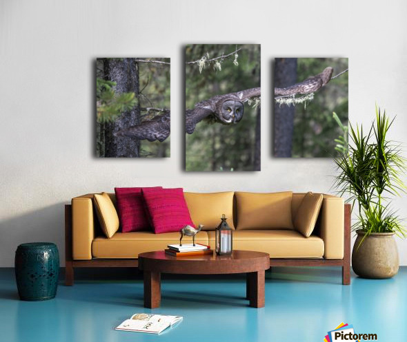 Great Grey Owl - Wing Span Canvas print