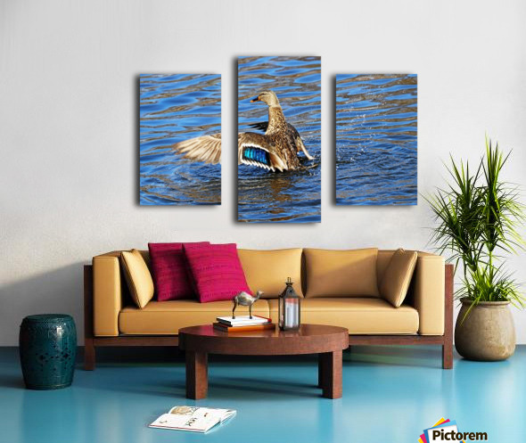 Flaunting The Blues Canvas print