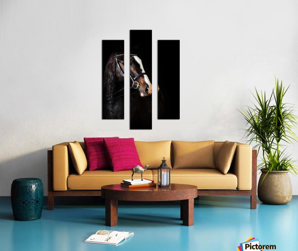 Studio Horses Canvas print