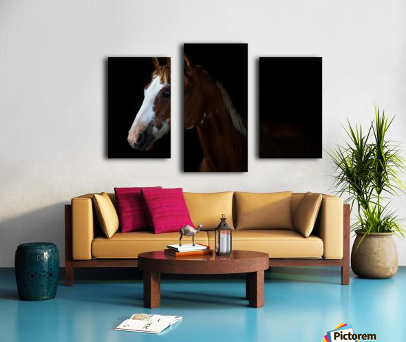 Studio Horses Canvas print