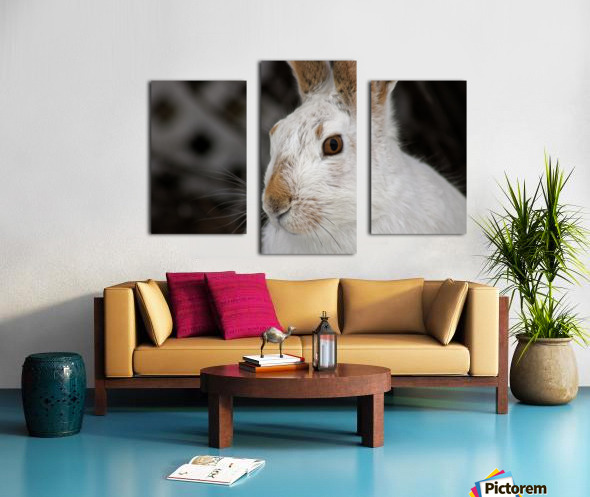 Mr Rabbit Canvas print