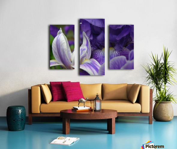 Floral Iris Photograph  Canvas print