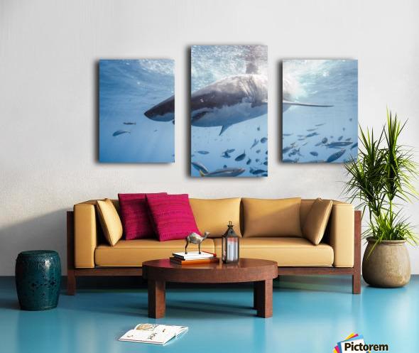 Great White Dive Canvas print