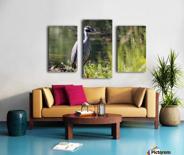 Yellow crowned Night Heron at Brick Pond Park 4690 Canvas print
