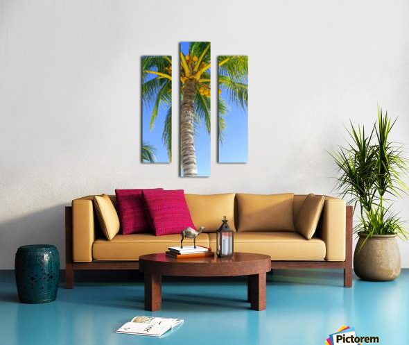 Palm Tree and Coconuts Canvas print