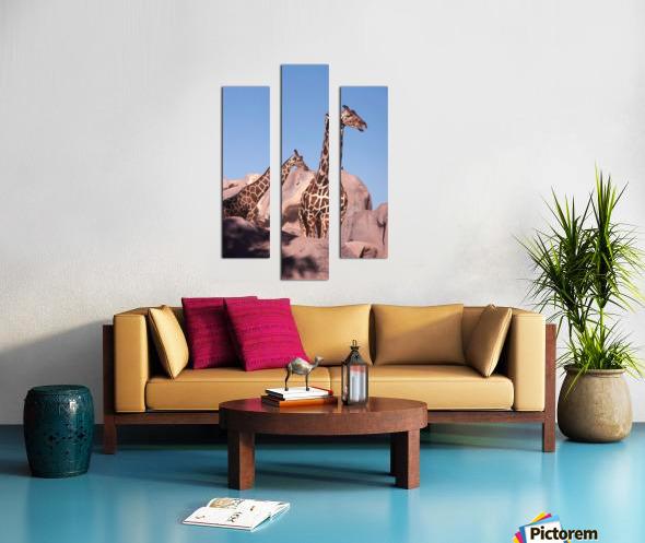Giraffe Photograph Canvas print