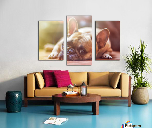 Sweet bully Canvas print