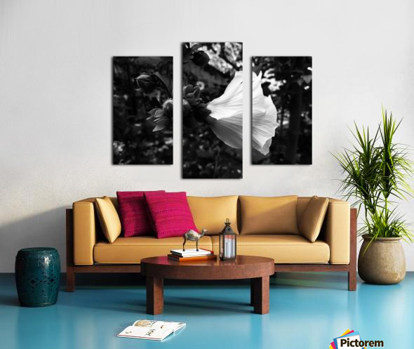 Blooming flower in black and white Canvas print