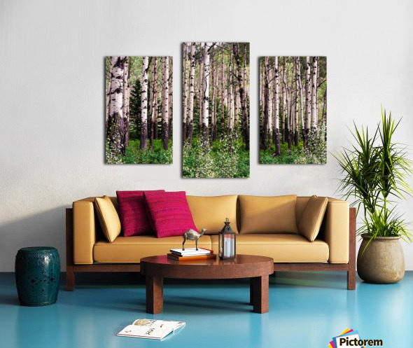 Aspens In Banff National Park at Muleshoe Canvas print