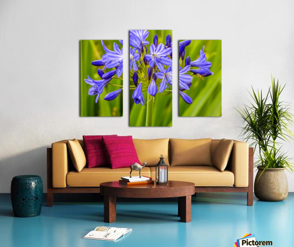 Close up of purple flowers Canvas print