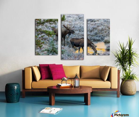 Moose On Golden Pond Canvas print