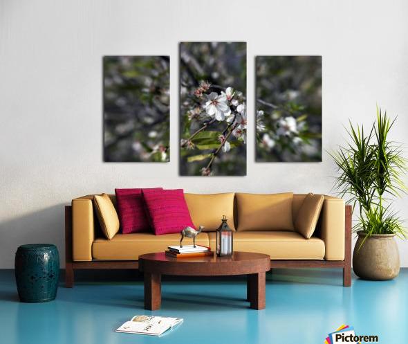 Flowering almonds 2 Canvas print