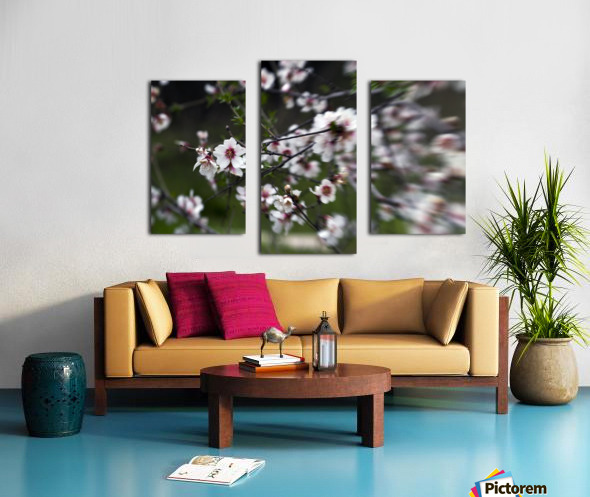 Flowering almonds 1 Canvas print
