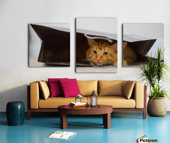 Cat In The Bag Canvas print