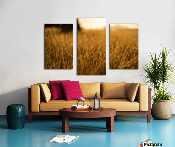 Golden Hour Field Canvas print