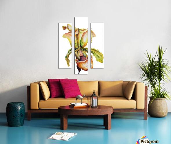 Blooming Paphiopedilum Orchids Canvas print