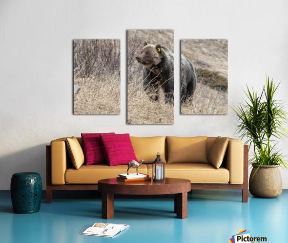 6897 - Grizzly Bear 2160 Canvas print