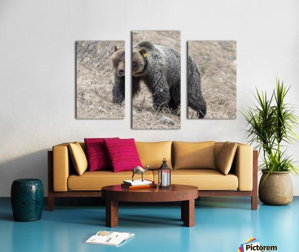 6970 - Grizzly Bear 2160 Canvas print