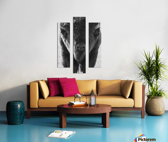 7893 - Buffalo Canvas print
