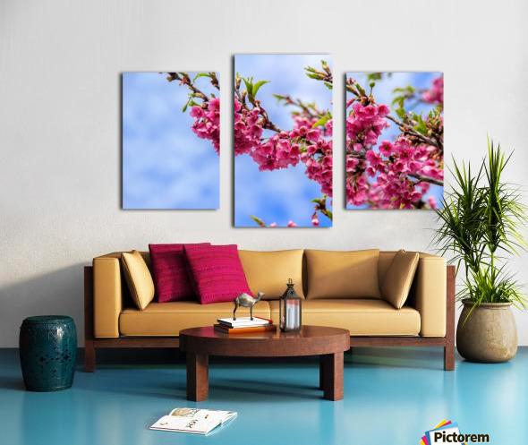 Tree XIII - Cherry tree Canvas print