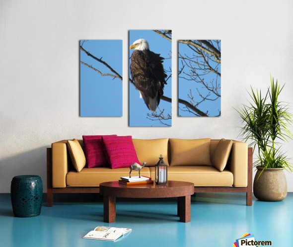Bald Eagle Sitting on a Branch Canvas print