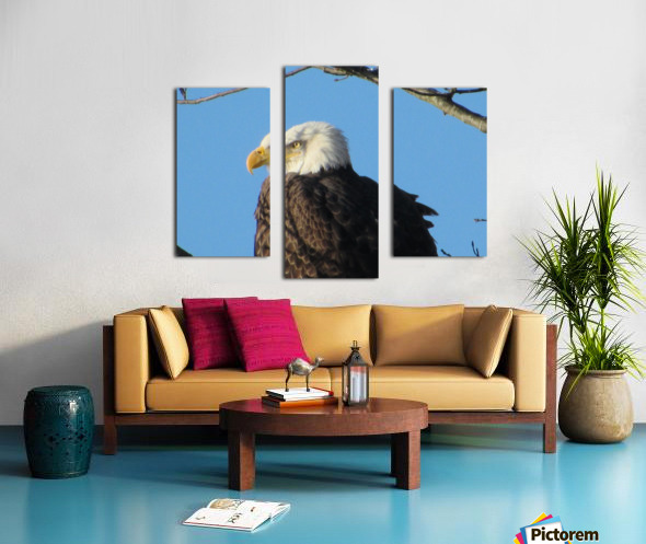 Bald Eagle Close Up Canvas print
