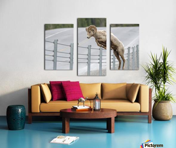 7585 - Bighorn Sheep - Kananaskis Country Alberta. Canada Canvas print
