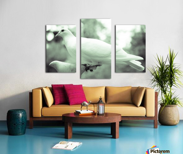 Dove enjoying a meal Canvas print