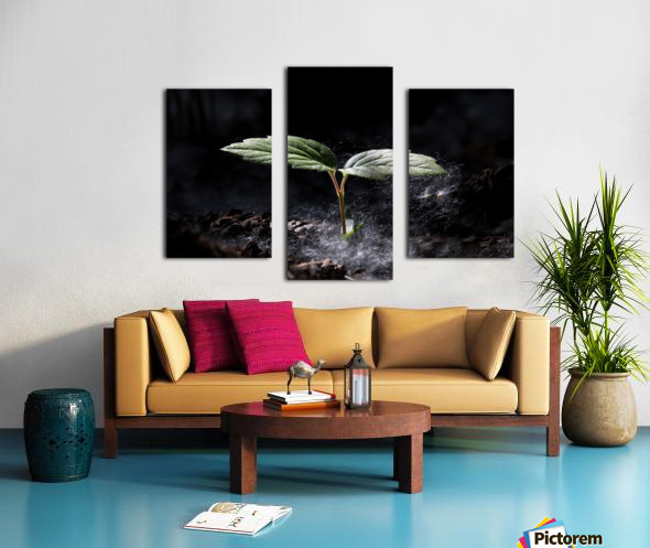 Young Sapling Canvas print