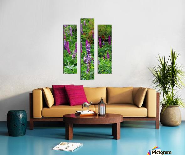 Shades Of Purple Lupine Canvas print