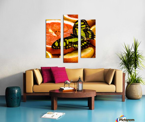 Butterfly And Oranges Canvas print