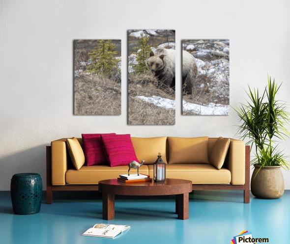 6944 - Grizzly Bear Canvas print
