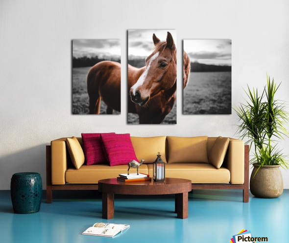Shining Horse Canvas print