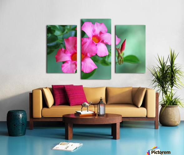 Mandevilla In Pink Canvas print