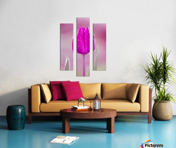 Pink Tulip II Canvas print
