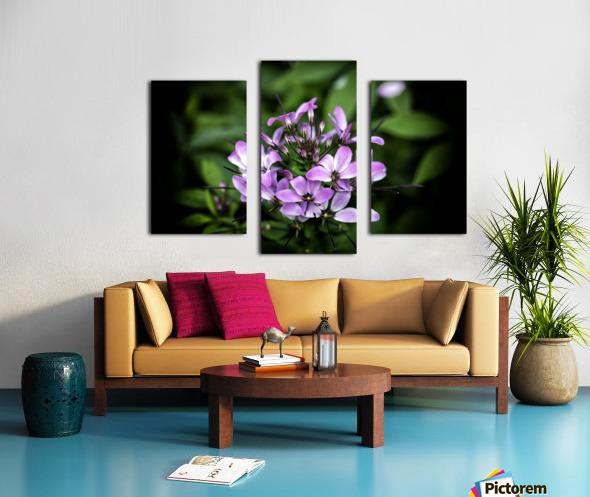 Beeplant Canvas print