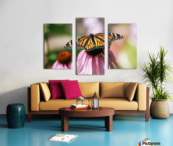 Closeup Butterfly on Cone Flower Canvas print