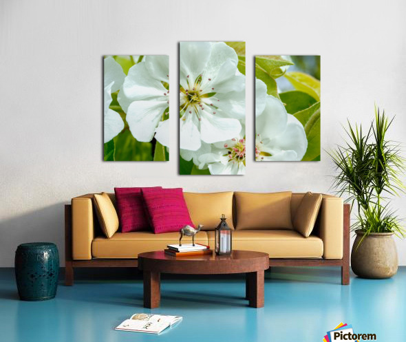 Pear Blossom - No. 1 Canvas print
