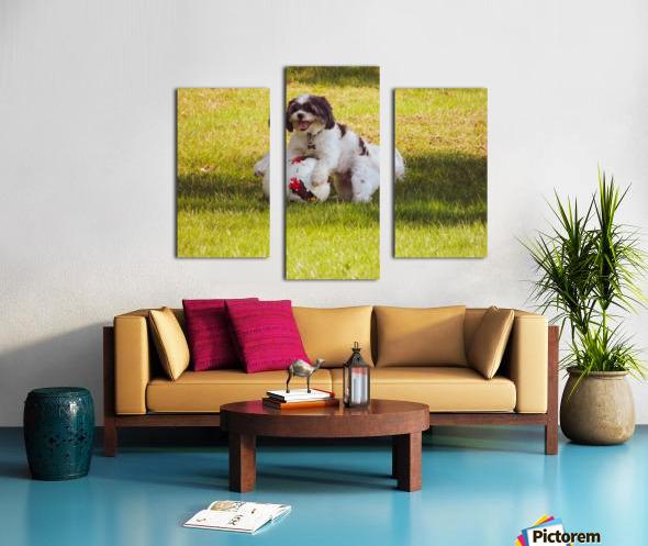 Ball Humpin Canvas print