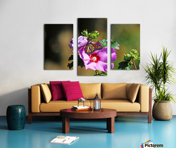 Monarch And Rose Of Sharon Canvas print