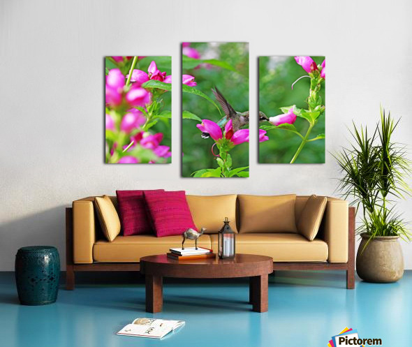 The Lure Of The Pink Turtlehead Canvas print