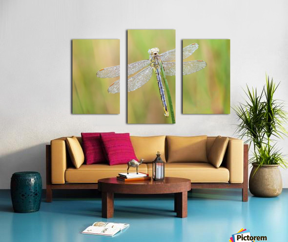An Fire dragonfly Canvas print