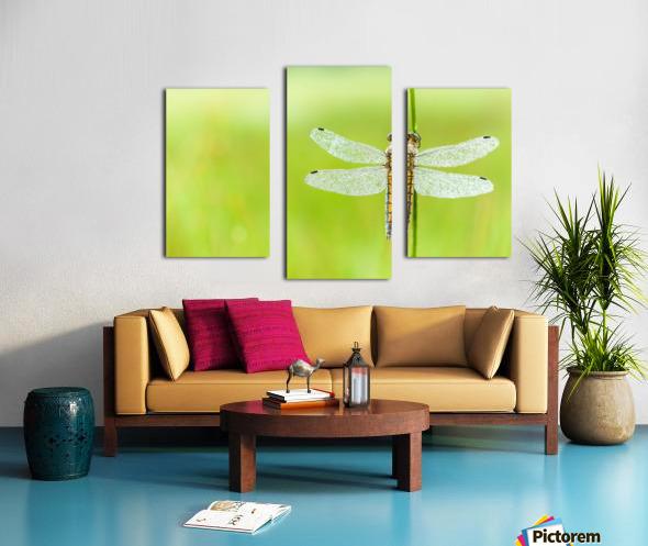 An Fire dragonfly Canvas print