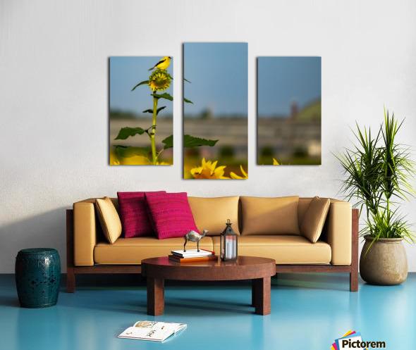 Sunflower Perch Canvas print