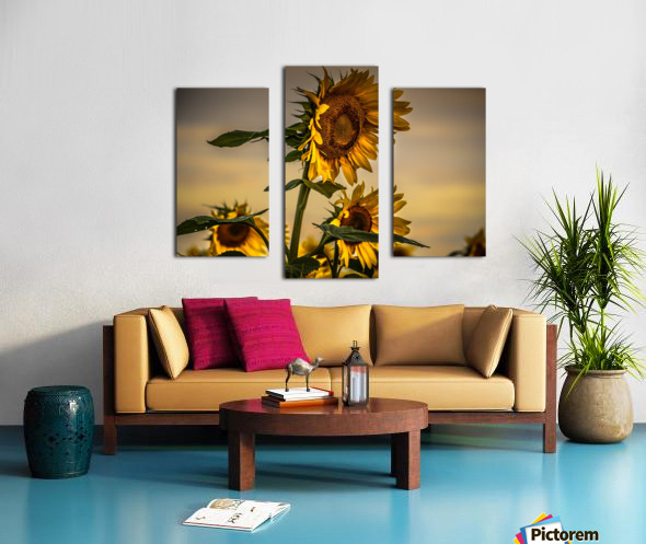 Gone with the Sunflowers Canvas print