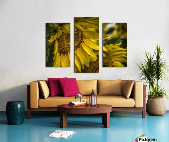 Sunflower Dawn  Canvas print