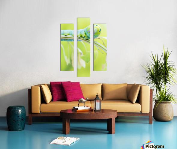 an Daphnis Nerii Canvas print