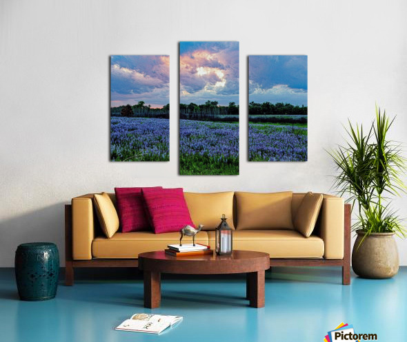 lupine sunset  Canvas print